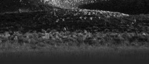 Savageland-Black-Grey-Hill-Phil-Guidry